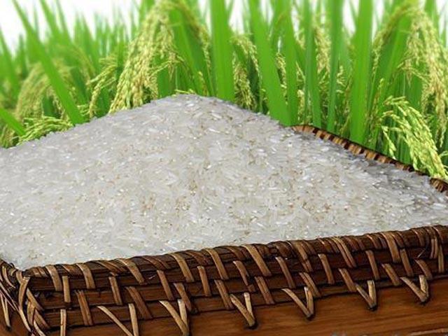 Gạo ngon TPHCM